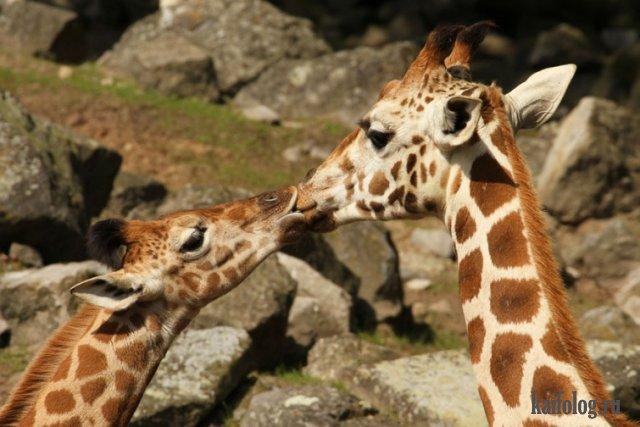 Подборка самых необычных поцелуев