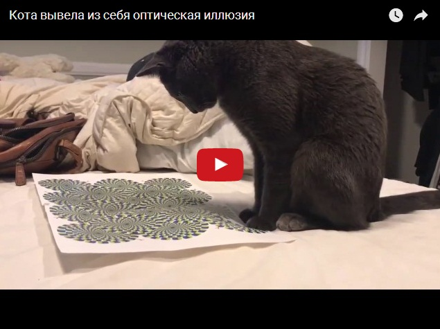 Оптическая иллюзия вывела кота из себя