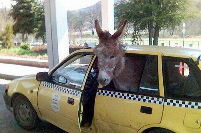 Прикольные фото животных в путешествиях