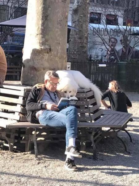 Свежая подборка эмоциональных фотографий животных и людей