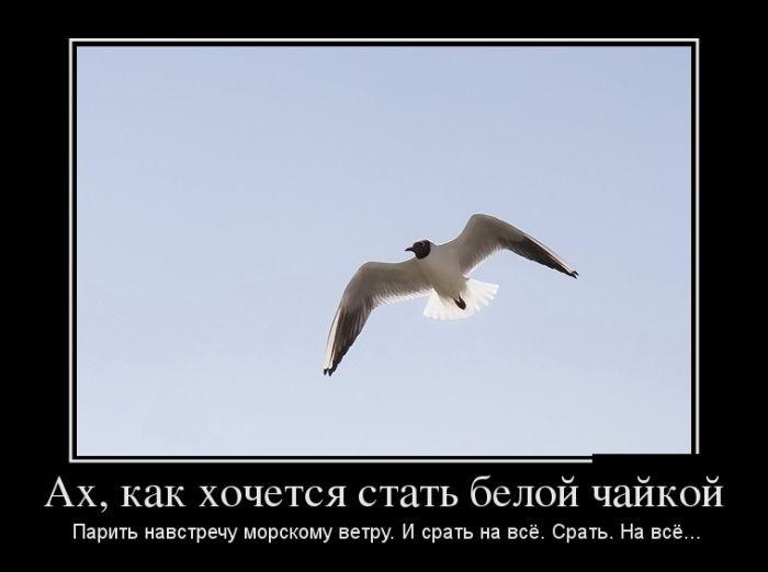 Про белую чайку, сближение людей и заводскую настройку Земли - смешные демотиваторы