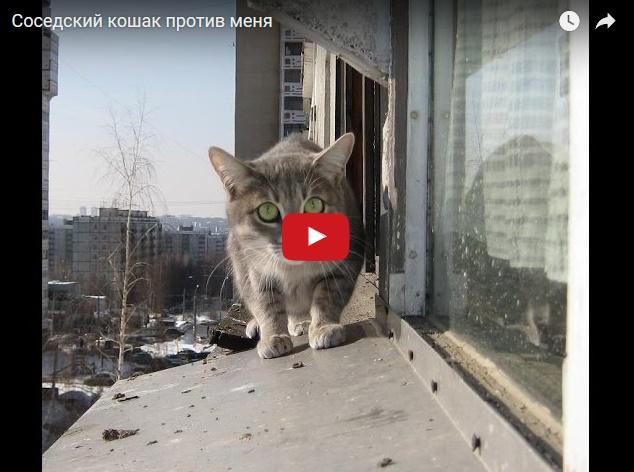 Когда у тебя война с соседским котом