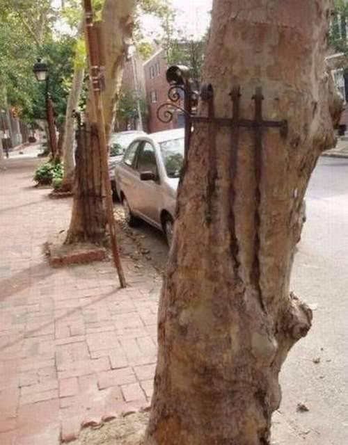 Вся сила и мощь деревьев