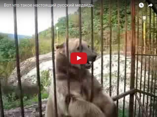 Вот что такое настоящий русский медведь