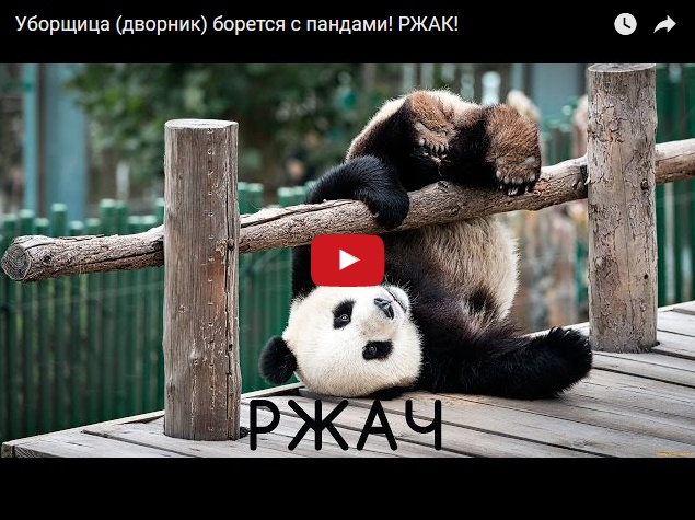 Ржака - уборщица зоопарка борется с пандами