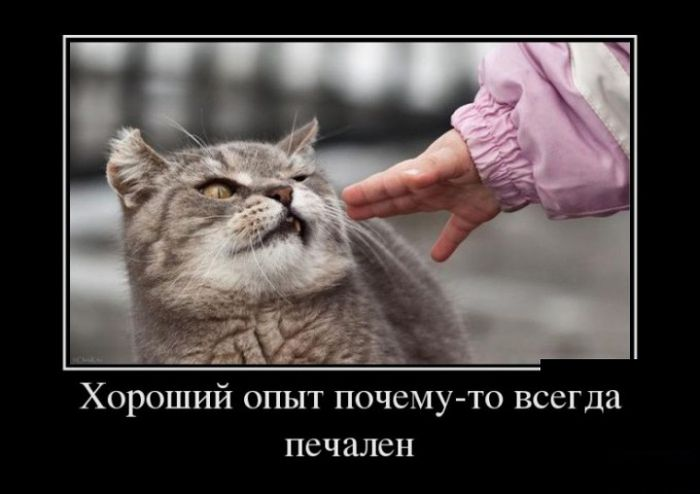 Про Сколково, восстание машин и Собачье сердце-2 - демотиваторы про жизнь