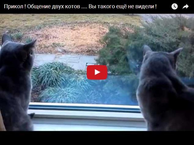Как общаются коты