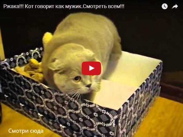 Прикольный кот разговаривает как человек