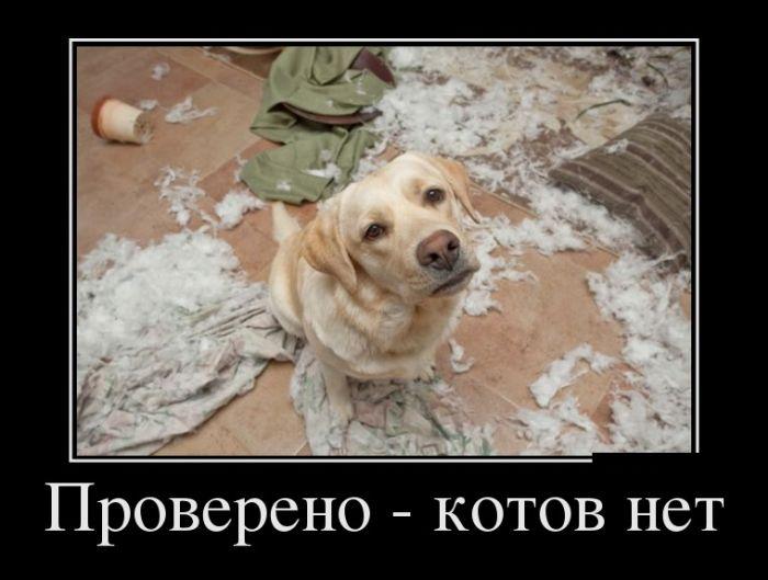 Про ошибки, прогресс и сложный выбор - русские демотиваторы