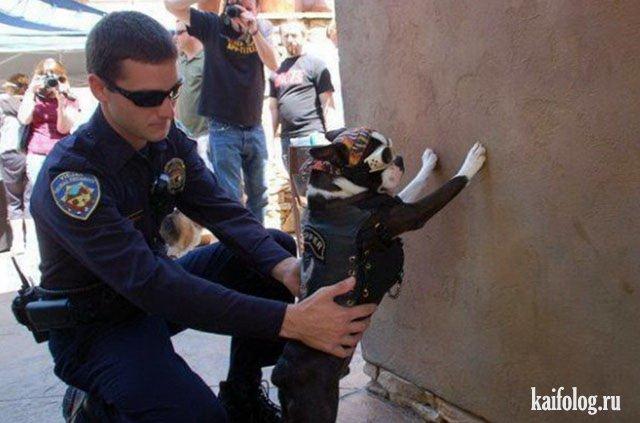 Животные и полиция - подборка прикольных картинок
