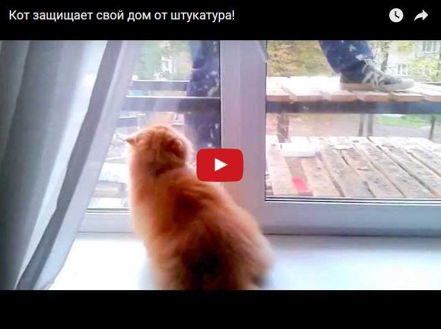 Кот защищает свой дом от штукатура