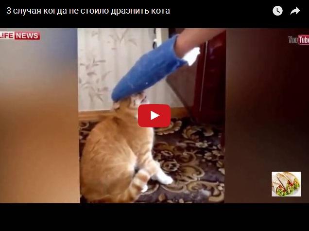 Когда не стоило дразнить кота