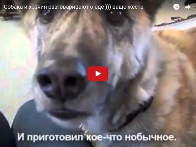 Хозяин и собака разговаривают о еде