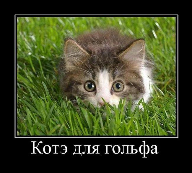 Про романтику, котэ и правильных пацанов - свежие демотиваторы