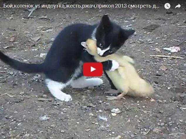 Котенок против утенка - кто кого?