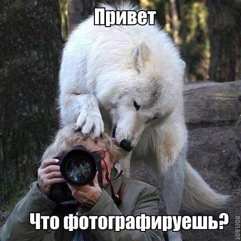 Сборник смешных фото с надписями