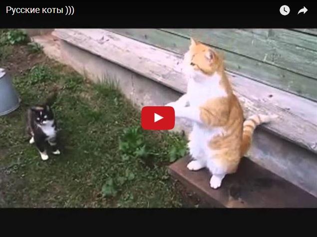 Русские коты - только они так могут