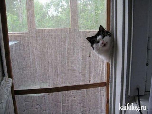 Веселая подборочка картинок про смешных котов
