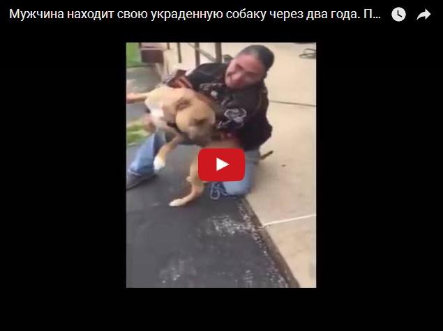 Мужчина нашел украденную собаку через 2 года - трогательное видео