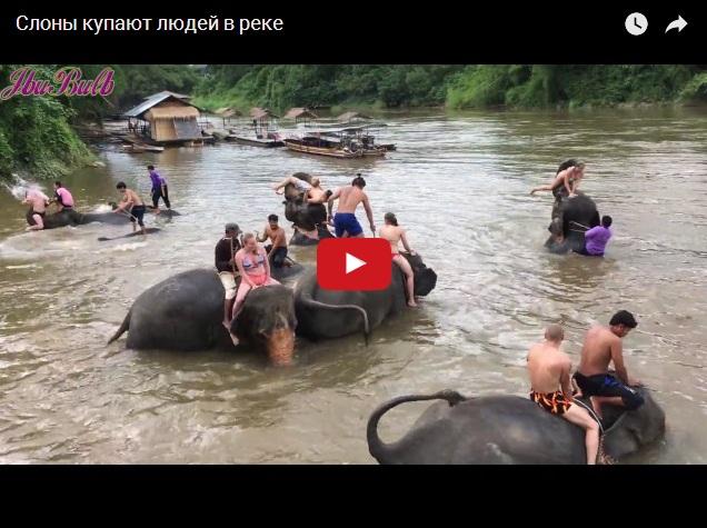 Слоны купают людей в реке - кадры из Индии