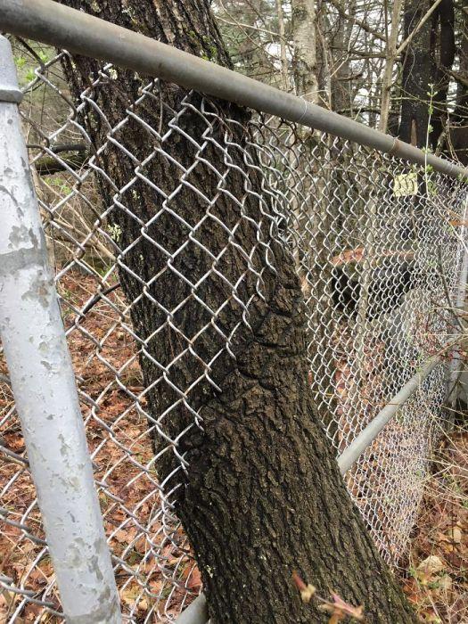 Подборка фотографий деревьев, растущих в необычных местах