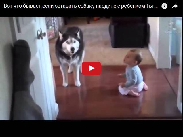 Вот что бывает, если оставить собаку наедине с ребенком