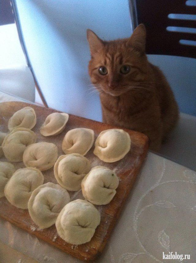 Прикольная подборка фото про котов-воришек