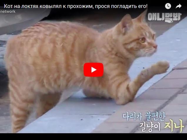 Кот на локтях приползает к прохожим, чтобы они его погладили