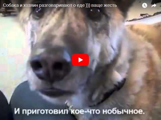 Собака разговаривает на русском языке