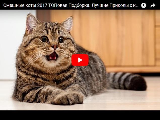 Сборник видео про смешных котов