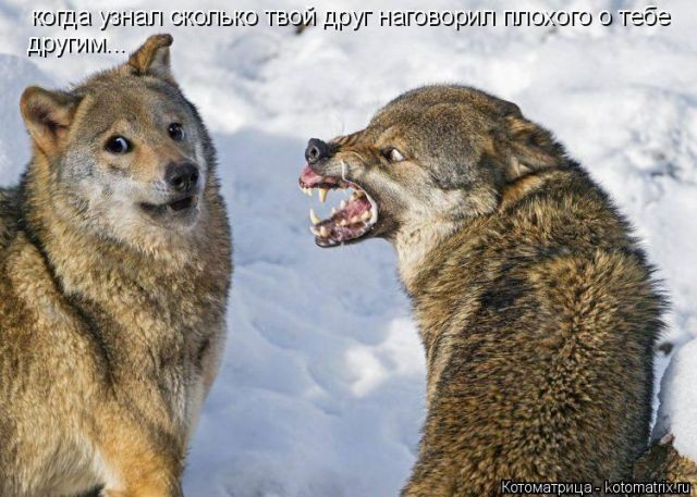 Смешные и прикольные животные