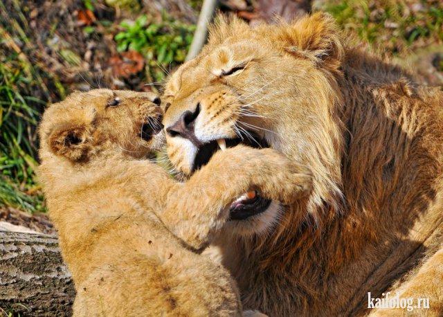 Милые, прикольные и смешные животные