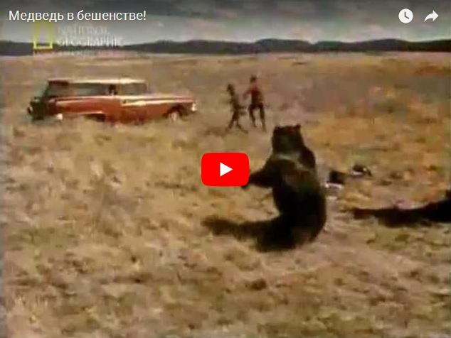 Медведя выпустили на волю и он в бешенстве