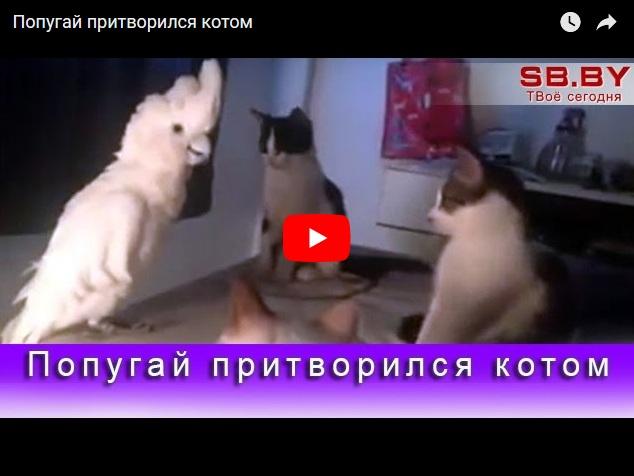 Попугай притворился котом - коты в шоке