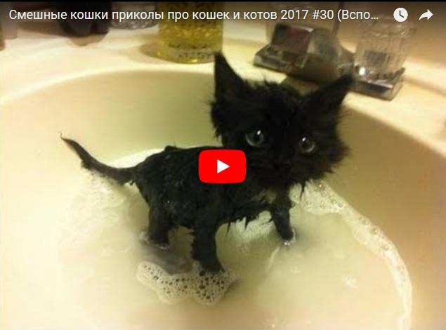 Приколы про кошек и котов. Смешные усатые-полосатые