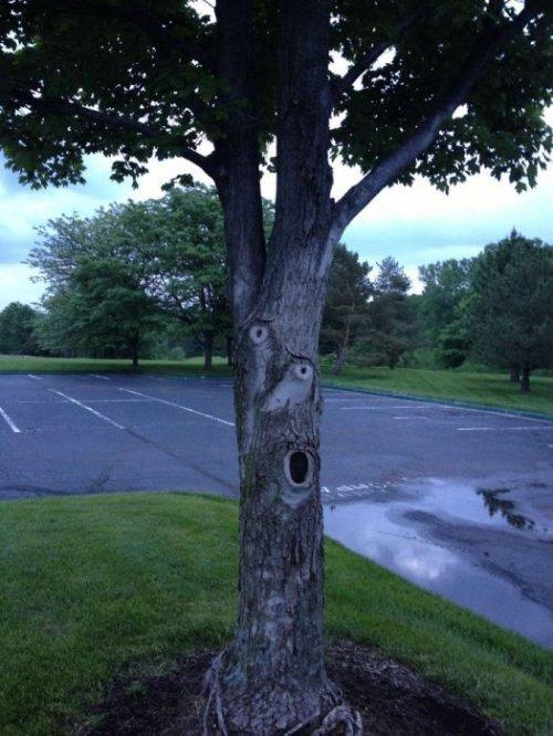Подборка фотографий самых необычных деревьев