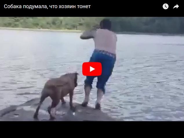 Случай на реке - собака подумала, что хозяин тонет