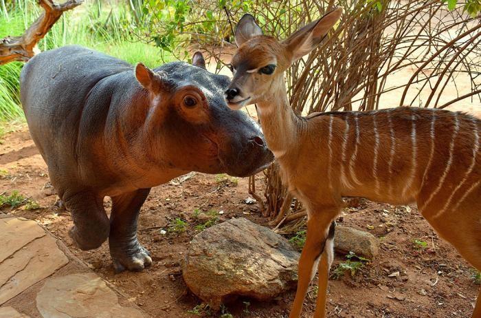Прикольные детеныши животных