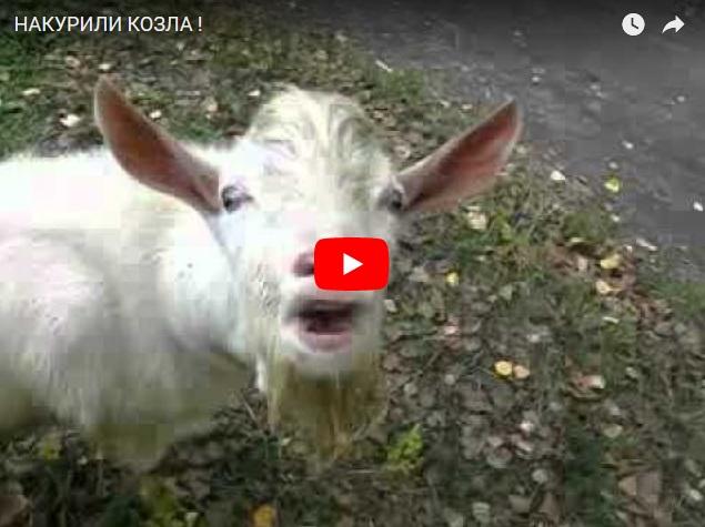 Наркоманы и козел - ржачное видео