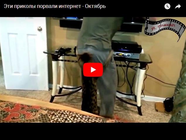Видео приколы, которые порвали Интернет