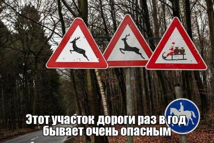 Смешные фотографии с надписями