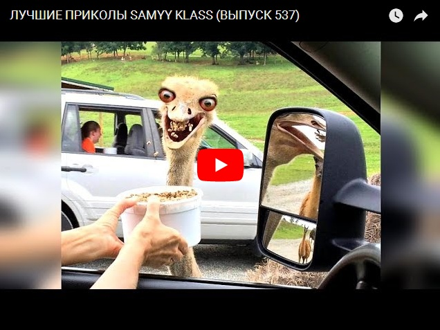 Лучшие видео приколы от канала Самый класс