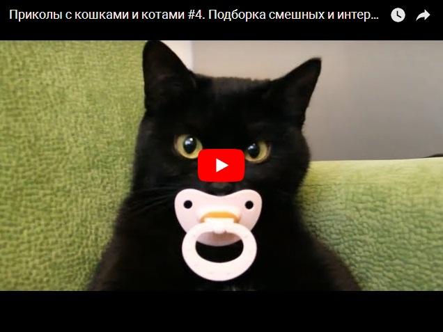 Подборка самого интересного и смешного видео с котами