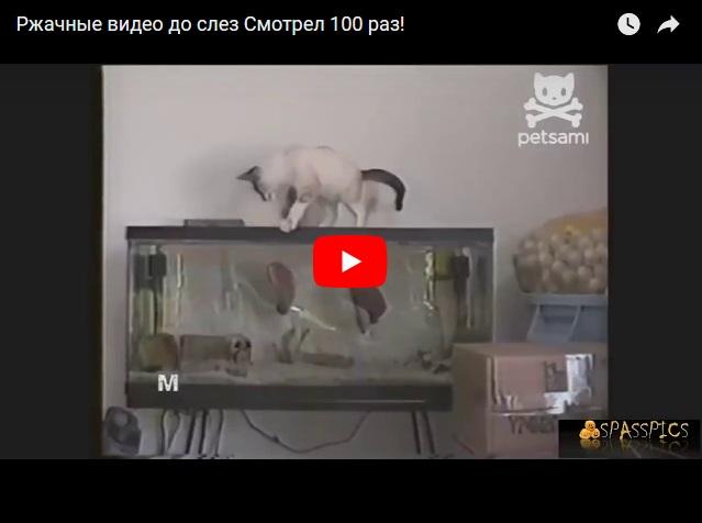 Видеоподборка ржачных баянов