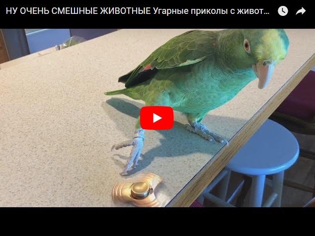 Ну очень смешные животные - подборка видео приколов