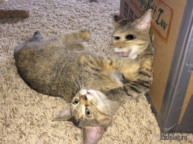 Прикольные домашние и дикие животные