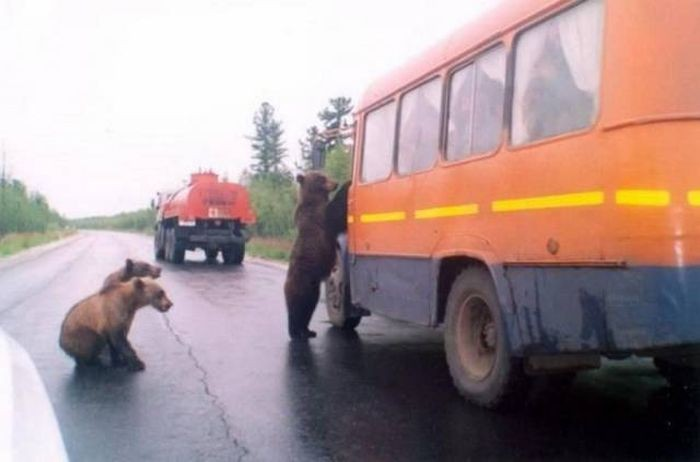 Русские приколы - фото с просторов нашей страны