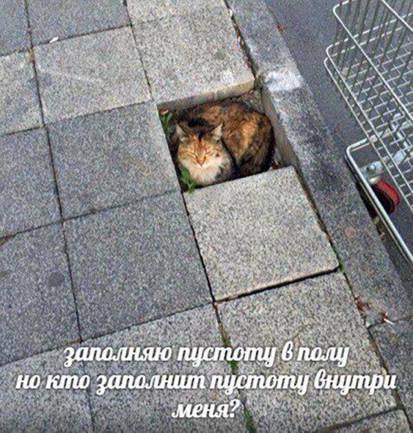 Свежий сборник смешных картинок и фотографий. Новые приколы