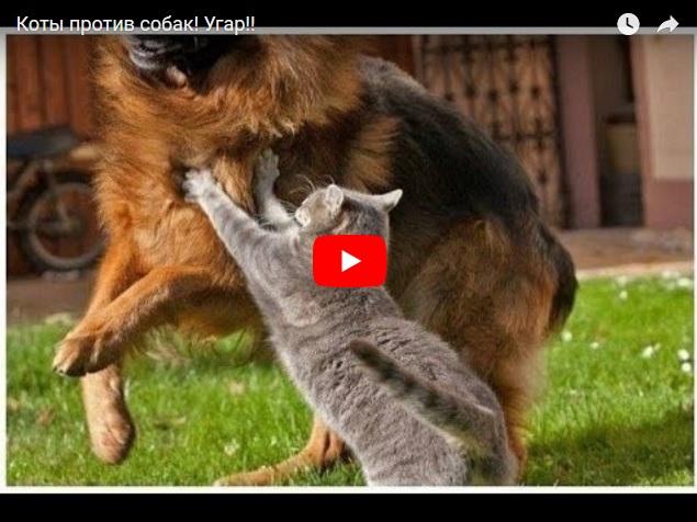 Коты против собак. Подборка прикольных моментов