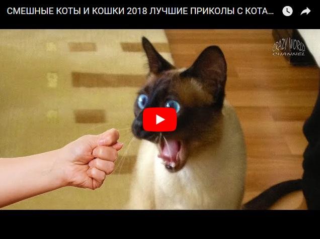 Смешные коты и кошки - подборка приколов